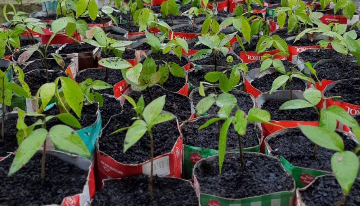 WEG donates 4000 native tree seedlings